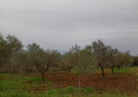 Città S. Angelo, ,Terreno,Vendesi,1001